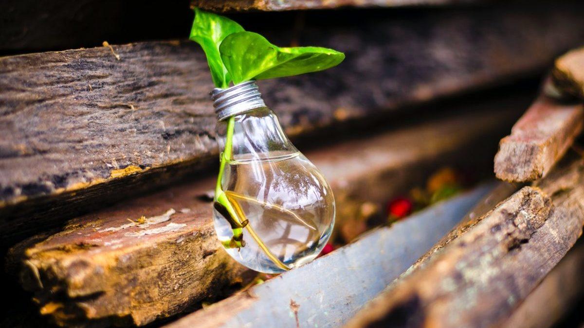 電球と葉っぱ