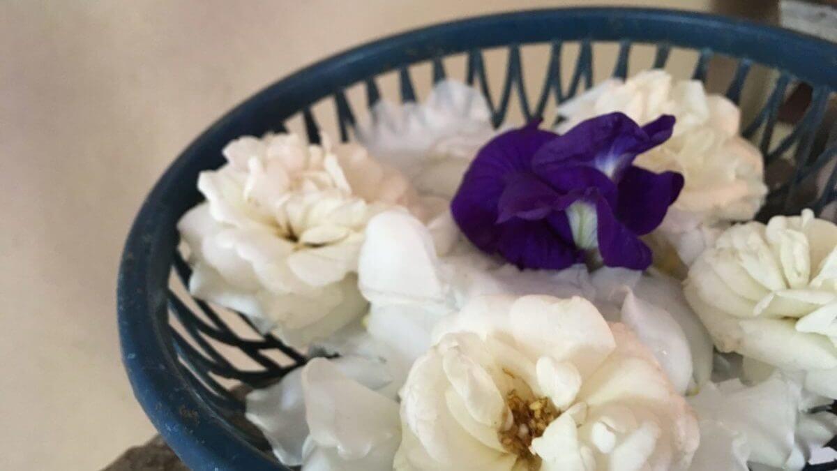 スリランカ花