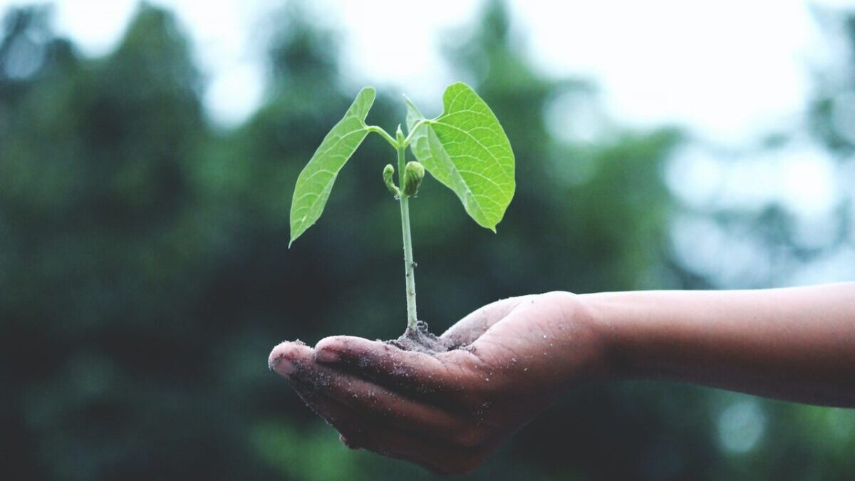 手のひらに植物