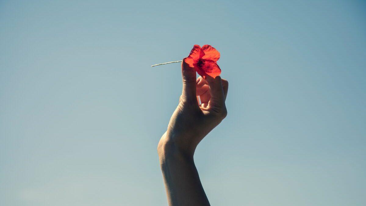 青い空と花