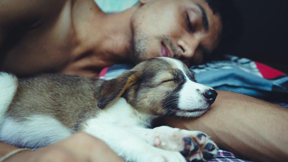 犬と寝る人